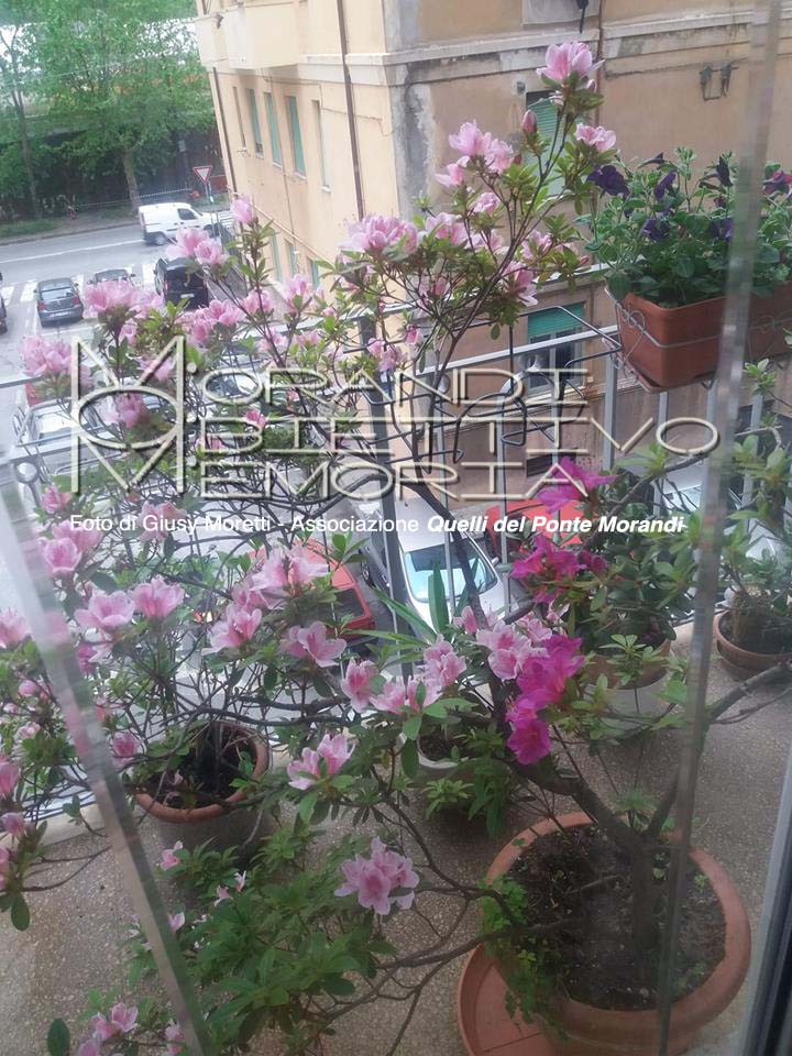 Via Porro, versante est, da un balcone fiorito